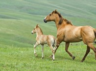 Equine Breeding Survey